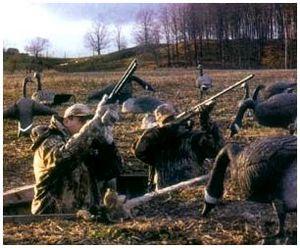 Способы охоты на гуся