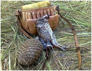 Сибирский рябчик и охота на него