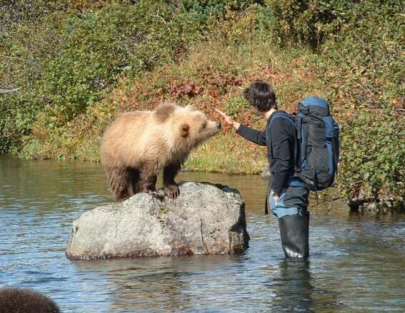 Взаимоотношения человека и медведя