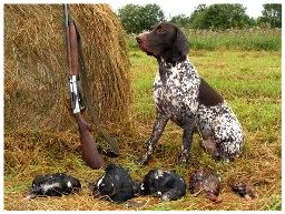 Какая собака нужна на охоте?