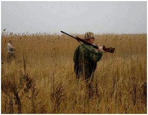 Техника стрельбы в зайца и поведение охотника