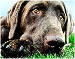Как охотнику научиться понимать свою собаку?