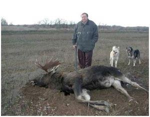 Охота с собаками на лося