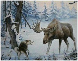 Породы собак, подходящие для охоты на лося
