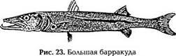 Энциклопедия выживания на море. Акулы