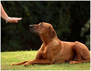 Если собака непослушна - советы хозяевам