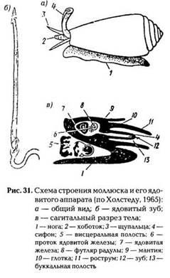 Животные, имеющие ядовитые органы для защиты и нападения: моллюски