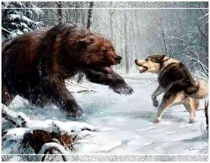 Как правильно научить собаку лайку охотиться