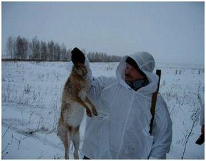 Правила поведения охотников при охоте на зайца с гончей