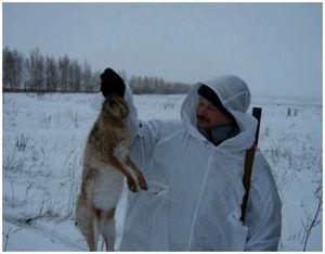 Охота на зайца без собаки