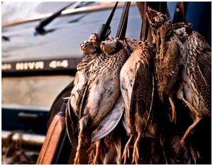 Как уберечь битую птицу от порчи до конца охоты