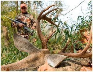 Облавная охота на оленя