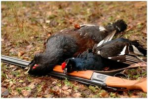 Хранение пернатой дичи на охоте