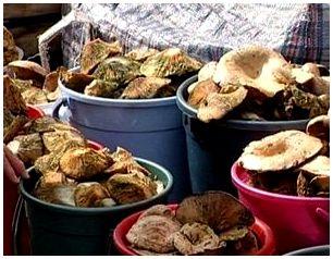 Хранение грибов