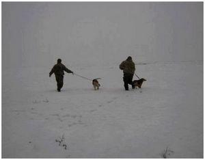 Правила испытаний охотничьих качеств гончих собак