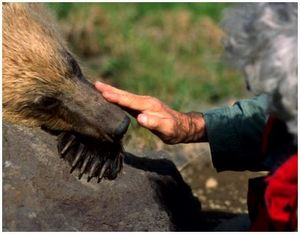 Правила поведения при встрече с медведем
