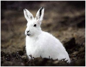 Как правильно охотиться на зайца ночью?