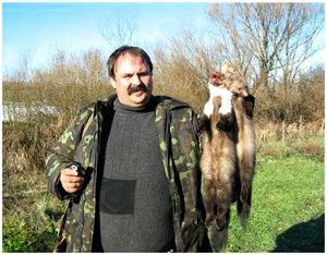 Охота с лайкой на куницу