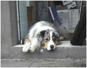 Стареющая охотничья собака: особенности ухода
