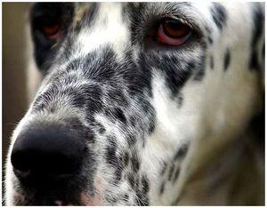 Как правильно ухаживать за собакой?