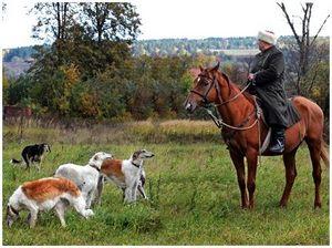 Основные требования к охотничьей лошади