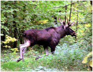 Что может испугать животных на охоте?