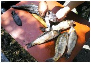 Как чистить и разделывать рыбу