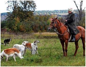 Использование лошадей на охоте