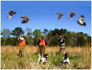 Культура охоты и правила поведения на охоте