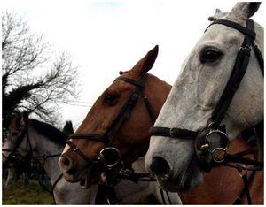 Обучение охотничьей лошади