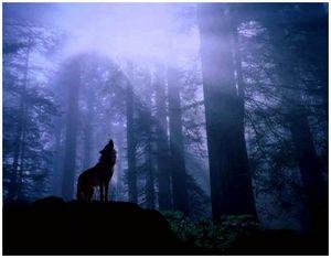 Применение собак для розыска волчьего логова