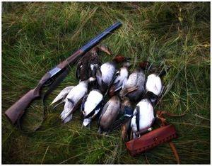 Охота на утку с лайкой