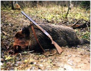 Охота на кабана: оружие