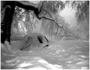 Как правильно ночевать в лесу зимой?