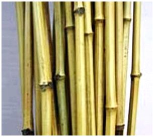 Бамбуковое удилище