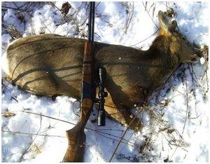 Охота на сибирскую косулю