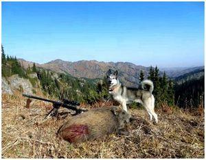 Советы по выбору патронов для горных охот