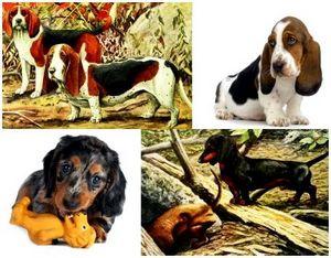 Охотничьи собаки вчера и сегодня