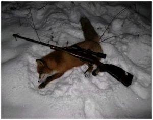 Оружие для разных видов охоты на лису