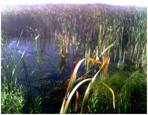 Техника безопасности при охоте на болоте