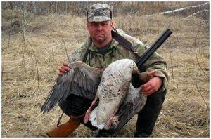 Как правильно охотиться на серого гуся?
