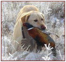 Кормление охотничьих собак