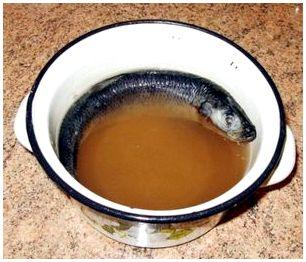 Тузлучный метод вяления рыбы