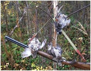 Охота на рябков