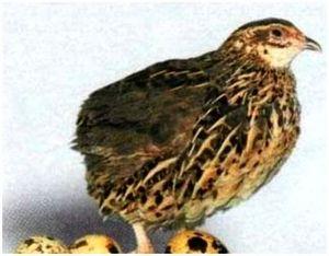 Разведение диких птиц в неволе