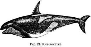 Энциклопедия выживания на море. Косатки