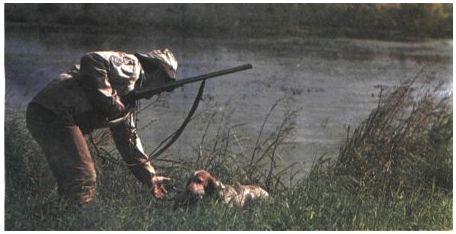 Русский спаниель - замечательная собака
