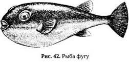 Животные, имеющие ядовитое мясо: рыбы