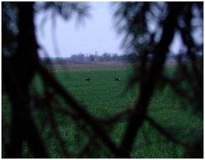 Охота на тетерева из шалаша в весенний период