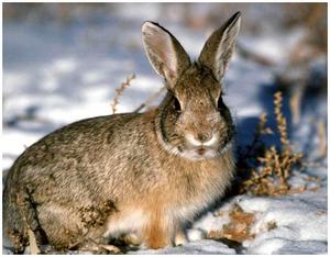 Основные способы охоты на зайца